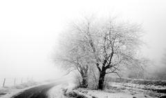 Frosty trees on the muddy roadside Stock Photos