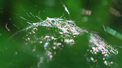 Spider web and natural light reflection Stock Footage