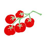 Stock Illustration of tomatoes on vine illustration