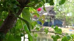 Malayan Vine Snake -  6/7 Stock Footage