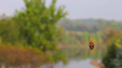 Spider Hanging on Web - stock footage