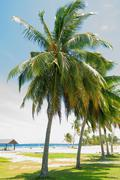 Palm tree alley Stock Photos