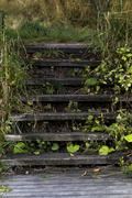 Forrest stairs Stock Photos