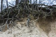 Stock Photo of exposed roots