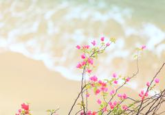 Small pink azalea with sandy beach background Stock Photos