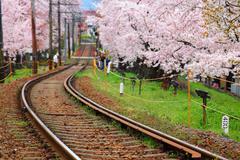 Railway and sakura tree Stock Photos