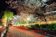 gion with sakura trss at night - stock photo