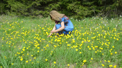 Woman gather yellow dandelion sowthistle flowers in meadow Stock Footage
