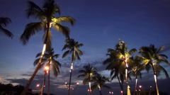 Illuminated palm trees in the evening Stock Footage