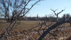Wild hawthorn Stock Footage