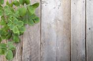 Stock Photo of leaves over wooden background.