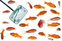Many goldfish and net Stock Photos