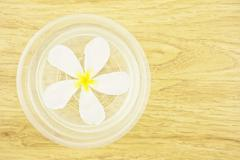 plumeria place on the water - stock photo