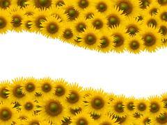 Auringonkukkaniityt.Sisätilat valkoisella tilaa tausta Piirros