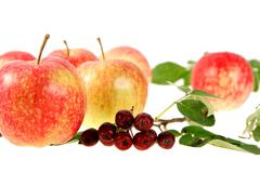 Still-life with red-yellow apples and ashberry on white backgrou - stock photo