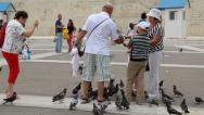 Stock Video Footage of People and pigeons near Parliament and Syntagma Square in Athens, Greece