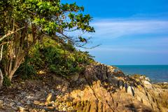 Stock Photo of Gulf of Thailand coast with tree