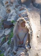 Monkey (macaca fascicularis) at khao wang ,petchburi thailand Stock Photos