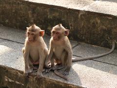 Monkey young (macaca fascicularis) at khao wang ,petchburi thailand Stock Photos