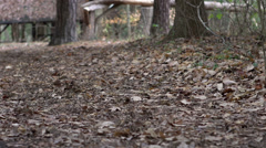 Forest floor covered with leaves Stock Footage