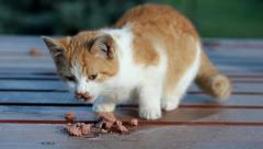 Little orange cat eating Stock Footage