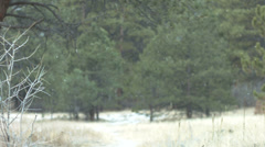 Mountain forrest snowfall Stock Footage