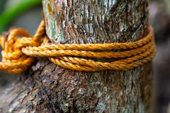 Knot rope in tree Stock Photos