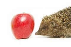 apple and hedgehog - stock photo