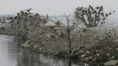A timelapse view of Ring-billed Gulls and Cormorants Stock Footage