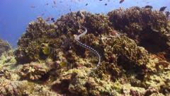 Sea Snake Over Coral Reef Stock Footage