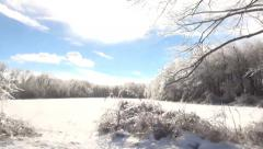 Snow field and ice bushes Stock Footage