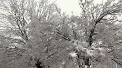 Ice covered tree Stock Footage