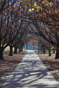 autumn colours. embankment of burley griffin lake near national gallery. canb - stock photo