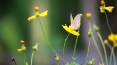 close up Butterfly on flower in garden - stock footage