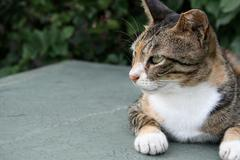 cat lie down and looking left - stock photo