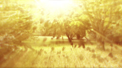 A forest in heaven. 4K Stock Footage