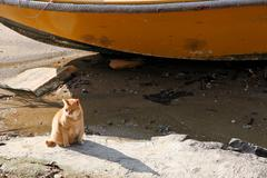 A cat is sitting in a wasted bay Stock Photos