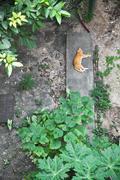topview of a cat sleeping in backyard - stock photo