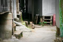 Cat in a narrow Stock Photos