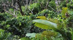 Jungle foliage Puerto Rico rain forest HD 1610 Stock Footage