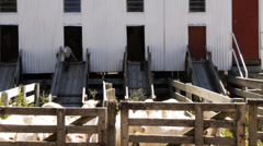 Shearing shed Stock Footage