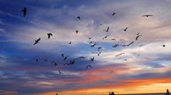Flock of seagull birds flying in the air at scenic sunset at a beach Stock Footage