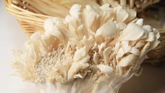 Maitake mushroom Stock Photos