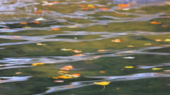 Floating Fall Leaves Stock Footage