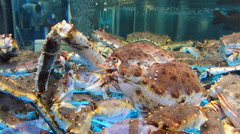 Live Seafood Crabs in Restaurant water Tank Hong Kong China Asia Stock Footage
