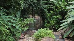 St Lucia Diamond Botanical Garden jungle river HD 1669 Stock Footage