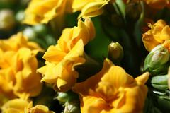 Stock Photo of yellow flower close up nature background