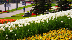 Tulips on Moscow streets. Stock Footage