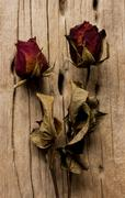 dried rose on old wooden background. vintage style. - stock photo