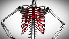 Human chest model rotate Stock Footage